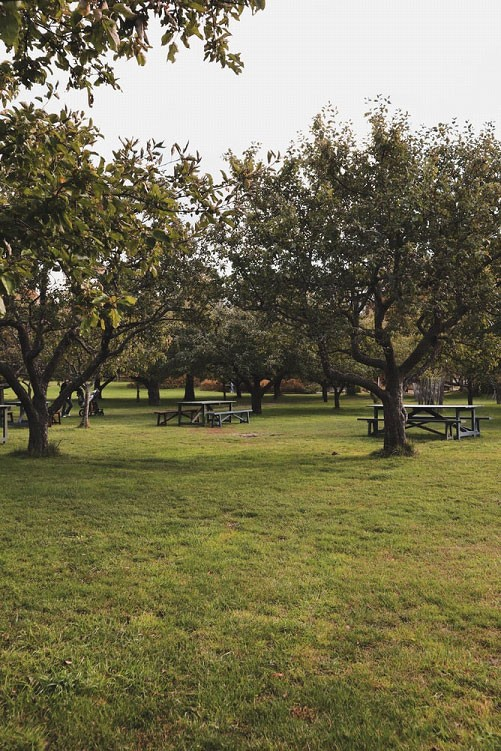 A Park with Trees and Picnic Tables, Riddled with Bare Spots